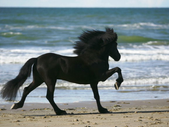 Lipperthof for Exterieur beurteilung pferd